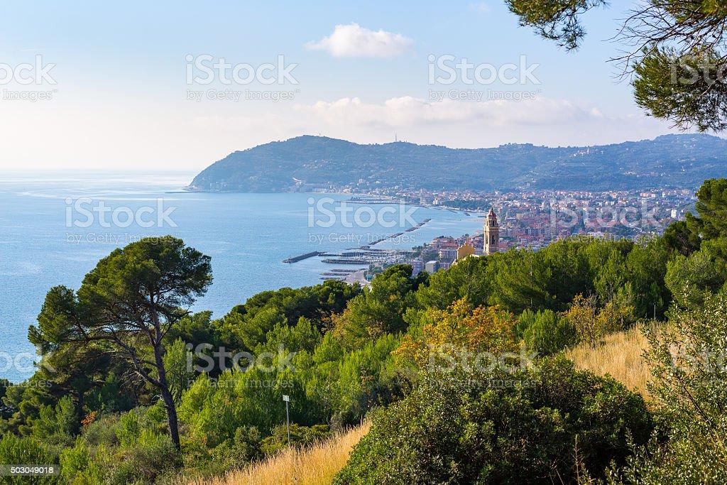 Olives trees and maritime pines on Italian coastline, Liguria stock photo
