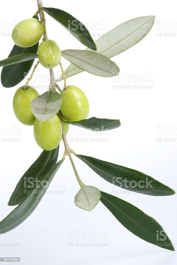Olives twig royalty-free stock photo