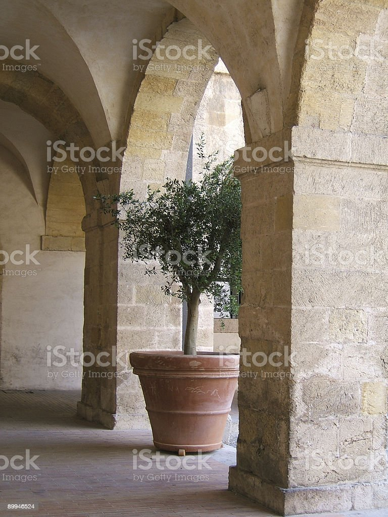 Olive-tree under arch royalty-free stock photo