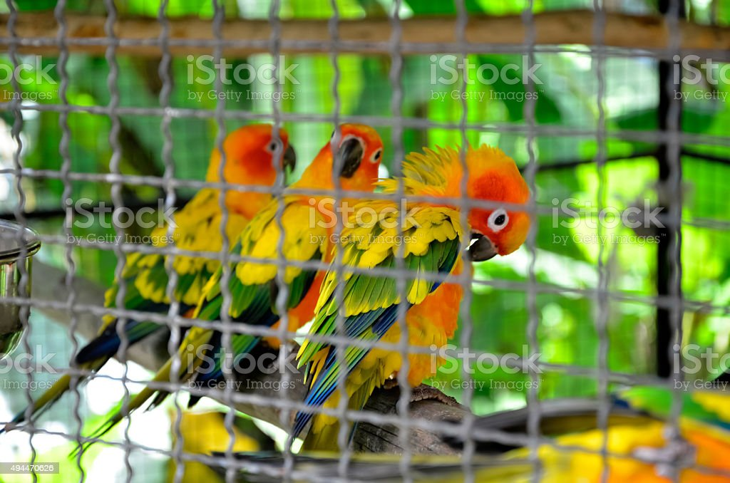 Сolorful parrots in a cage stock photo