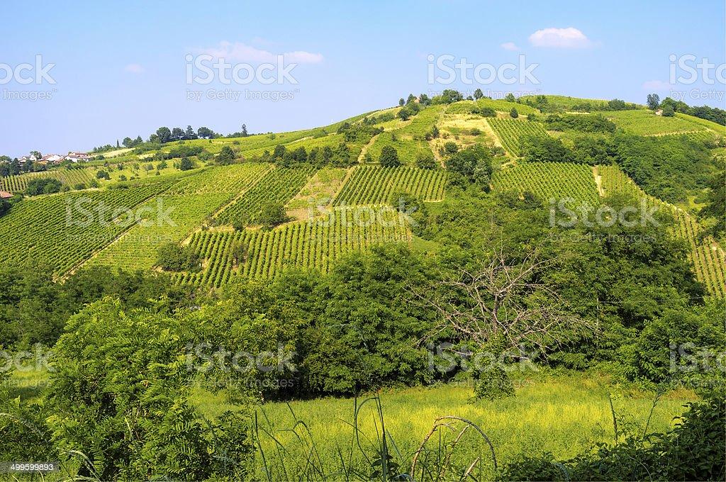 Oltrepo Pavese vineyards. Color image stock photo