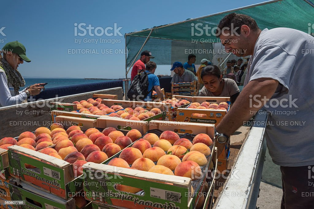 olunteers unload cases of peaches to be served for refugees stock photo