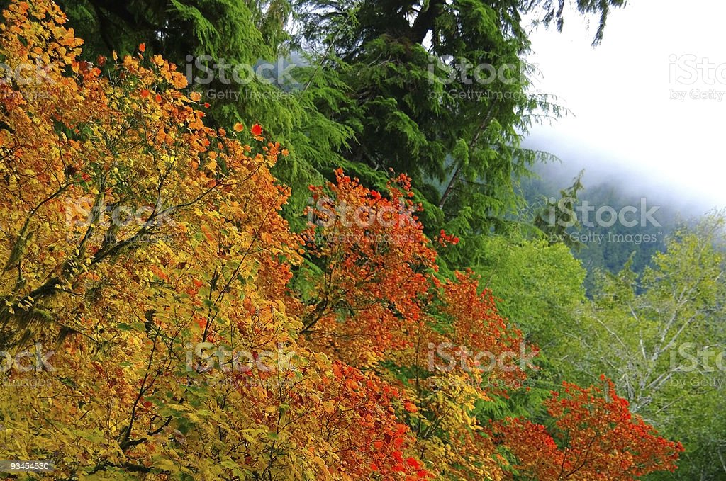 Olympic Colors royalty-free stock photo