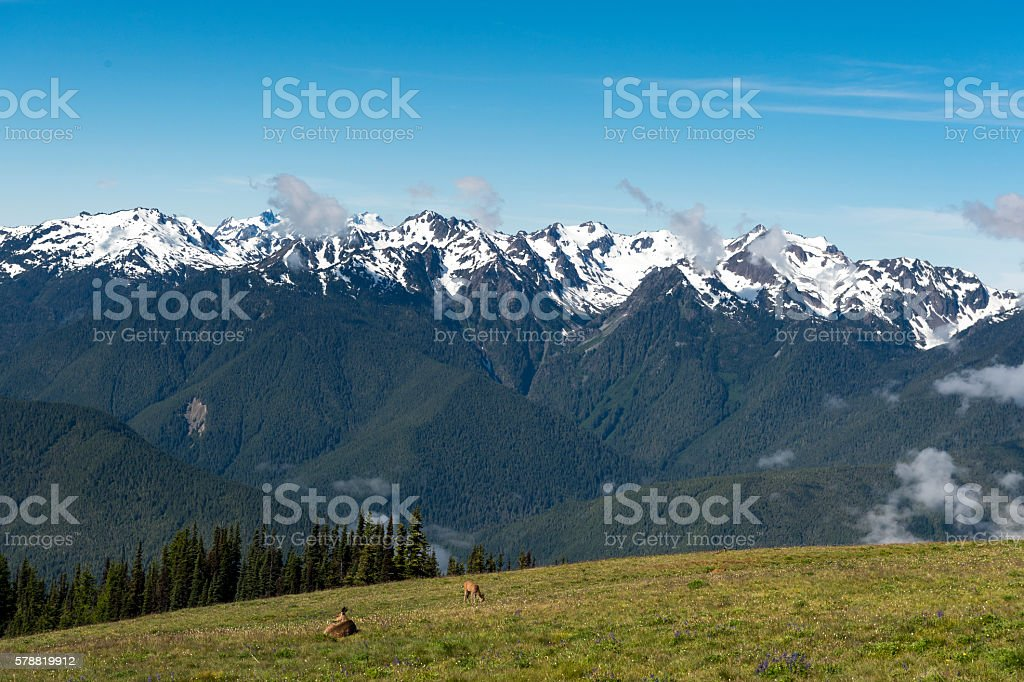 Olympic Mountains Deer Hurricane Ridge Olympic National Park Washington State stock photo