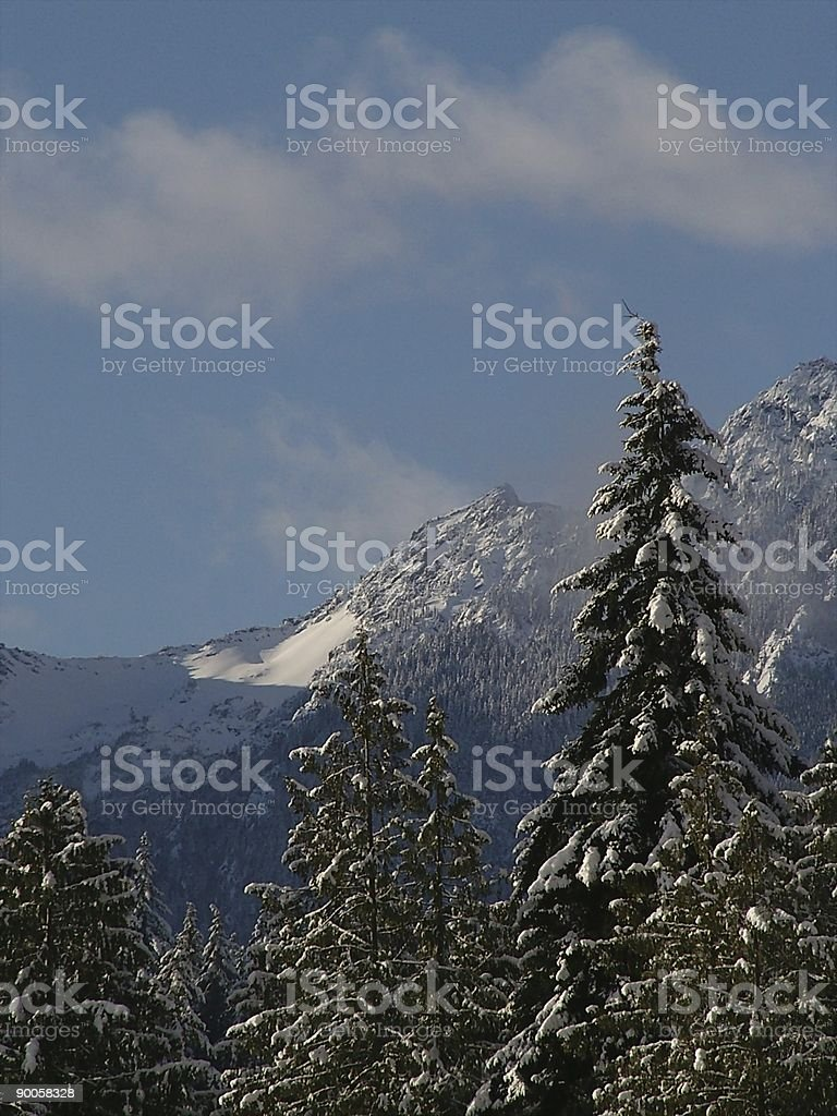 Olympic Mts behind Evergreens royalty-free stock photo