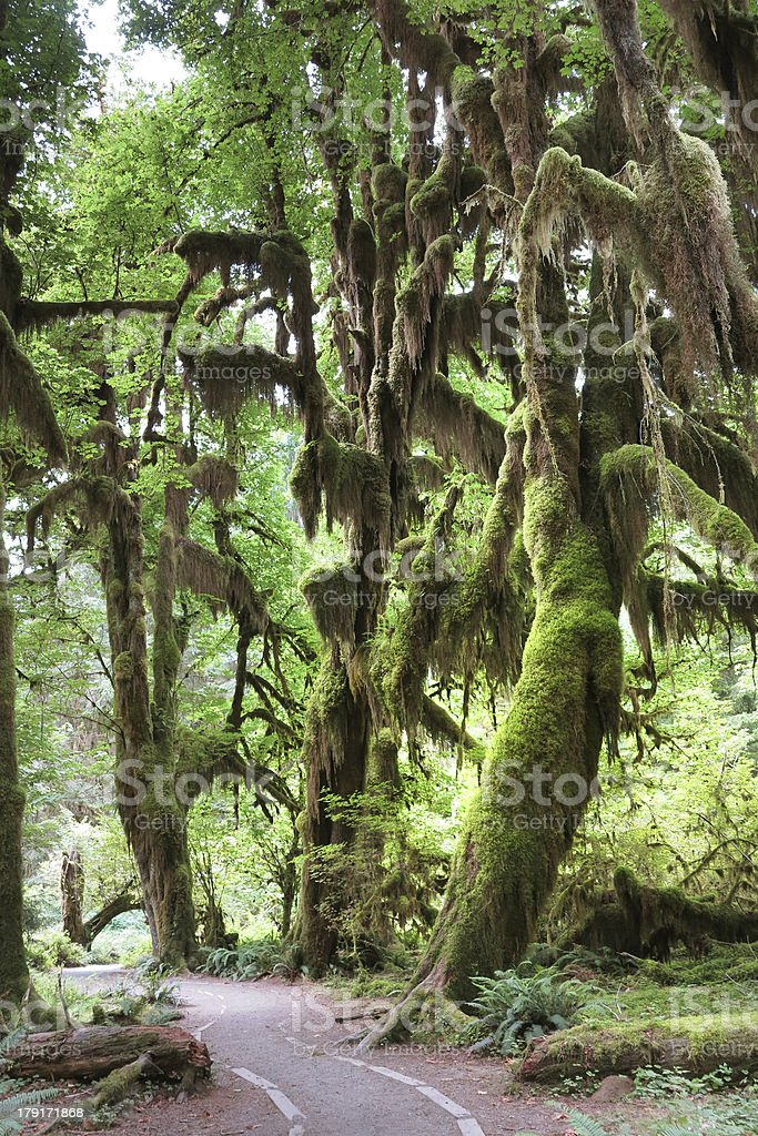 Olympic National Park Rainforest royalty-free stock photo