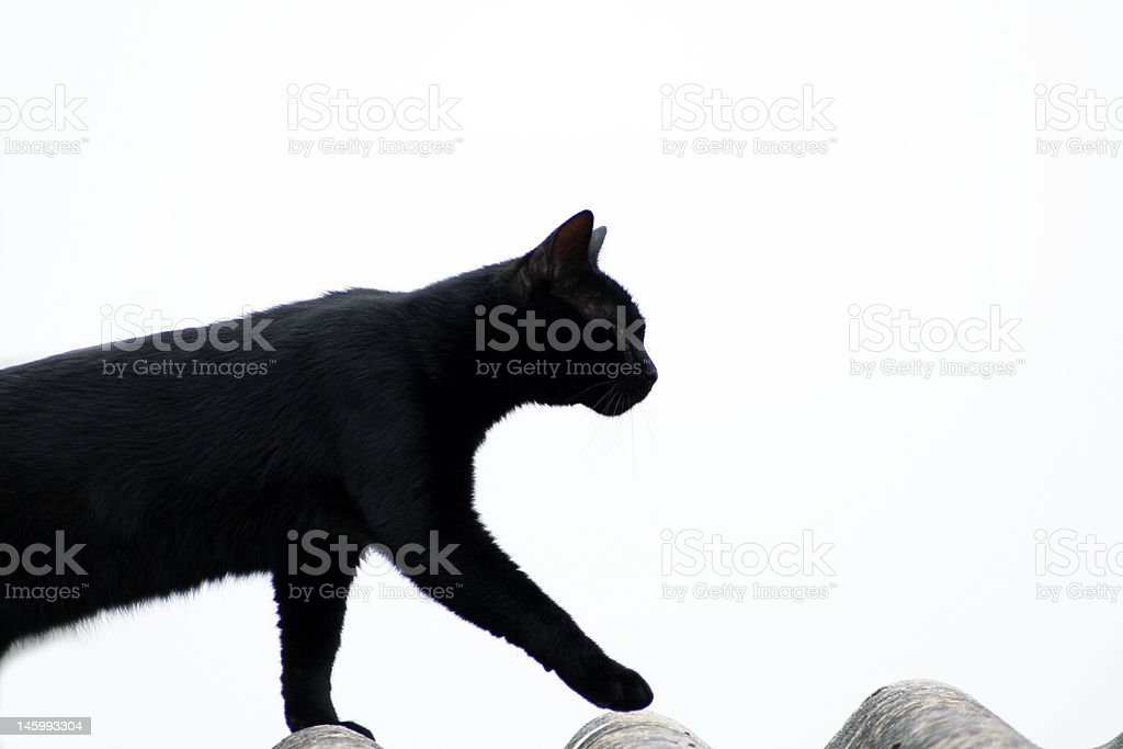 Olympe le chat stock photo