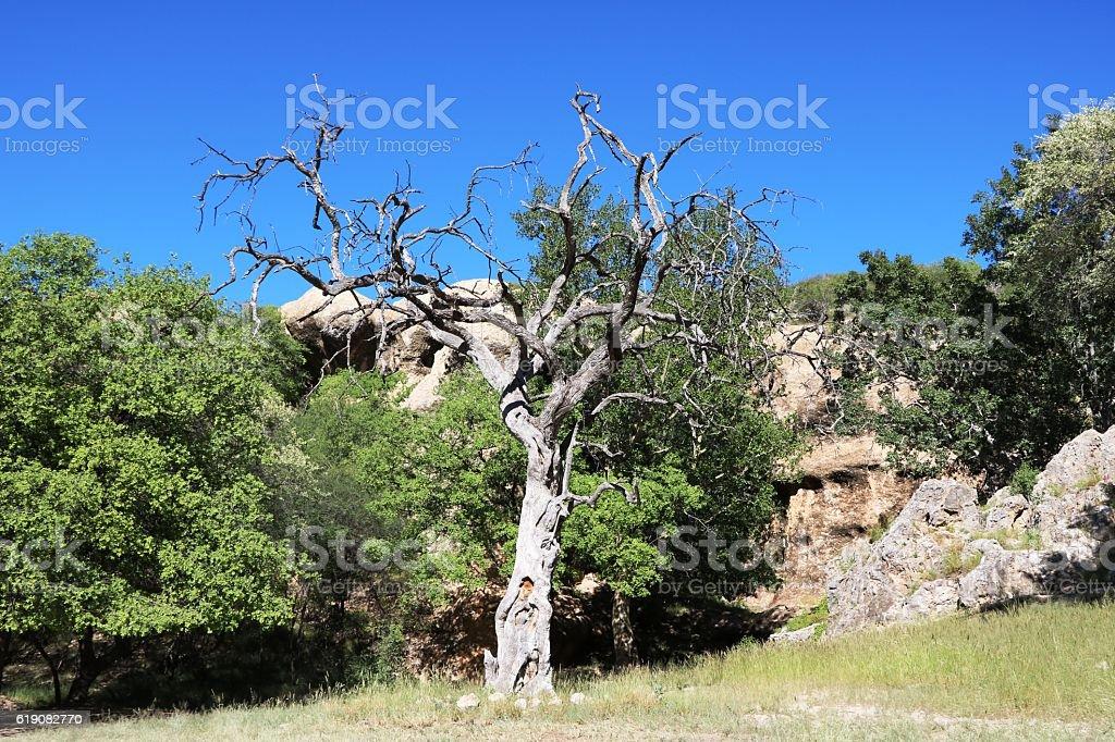 Omaruru landscape in Namibia, Africa stock photo