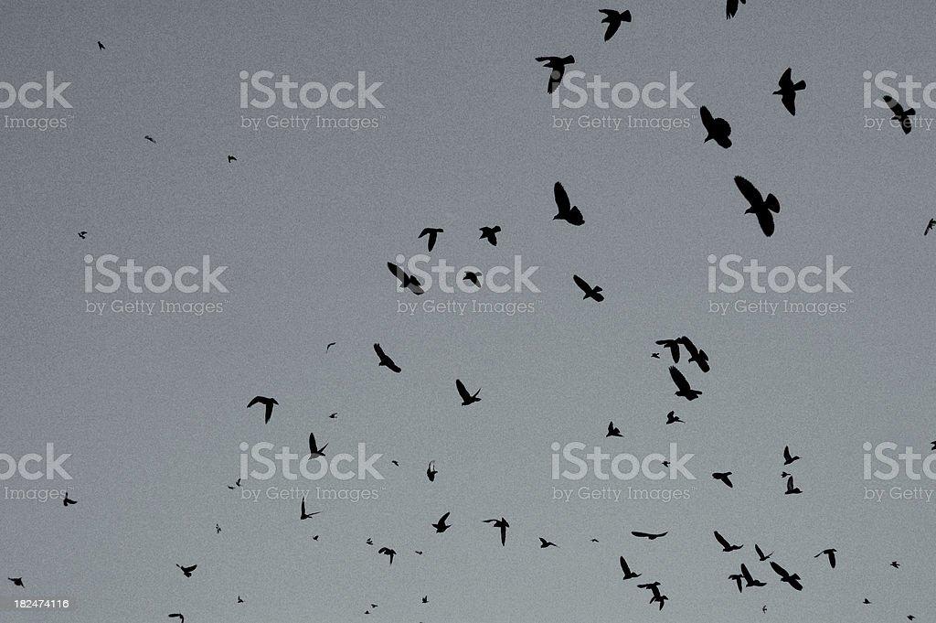 Ominous birds royalty-free stock photo