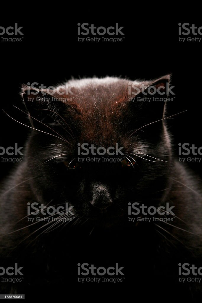 Ominous Black Cat stock photo