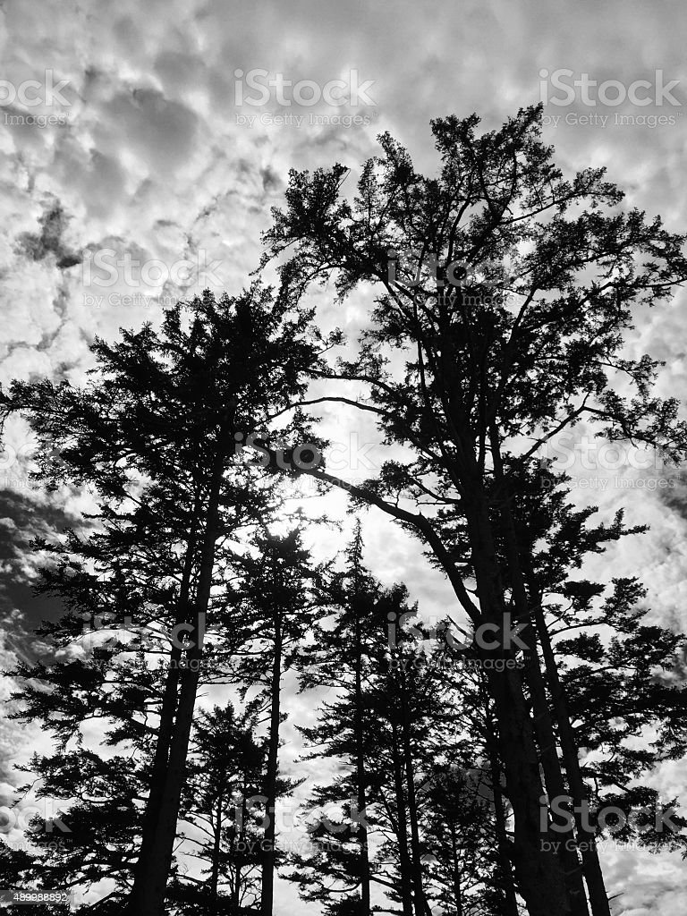 Ominous trees in a forest royalty-free stock photo