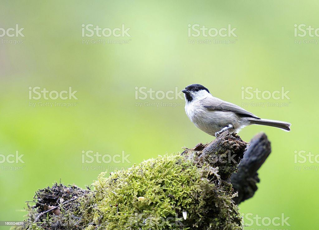 On a brench royalty-free stock photo