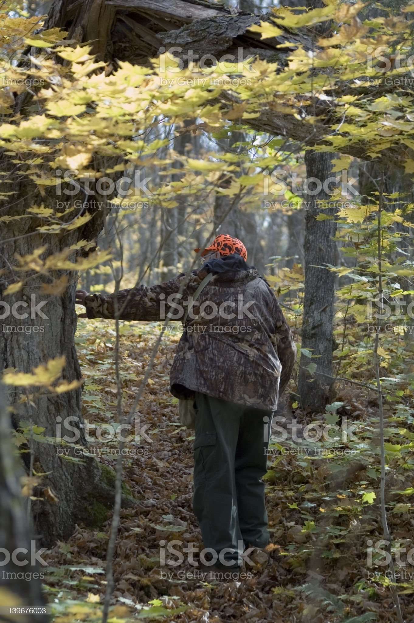 On deer track 1 royalty-free stock photo