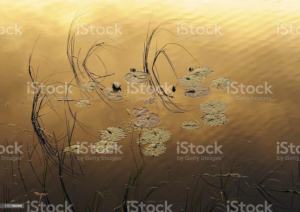 On Golden Pond royalty-free stock photo