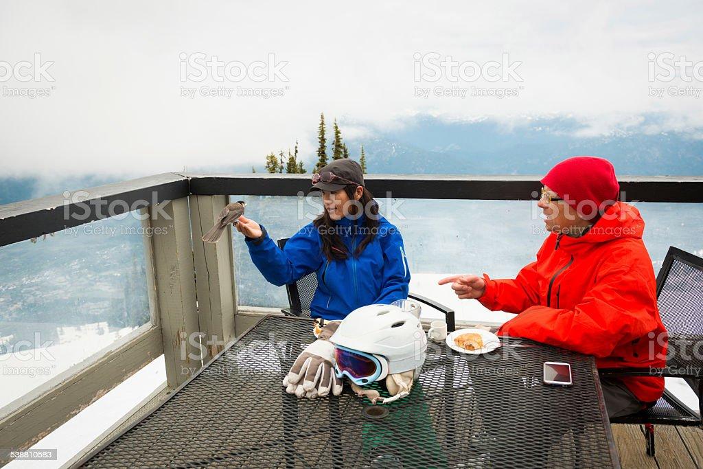 On mountain wildlife stock photo