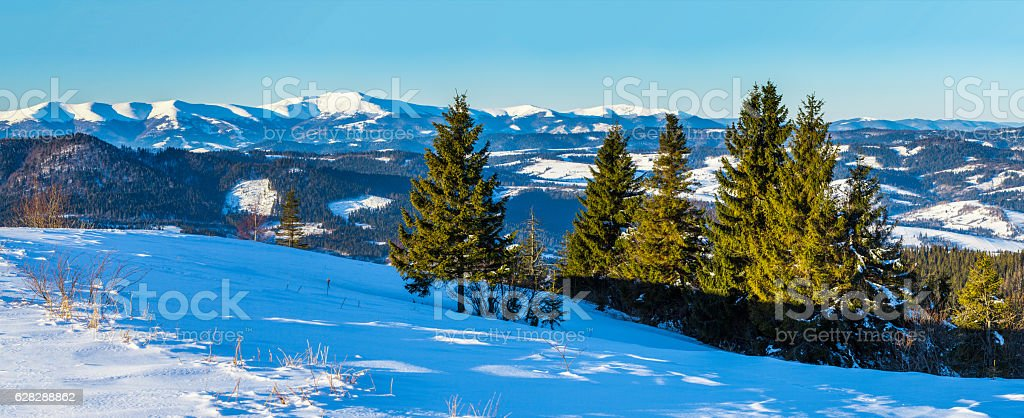 On mountains with snow the nice trees are standing stock photo