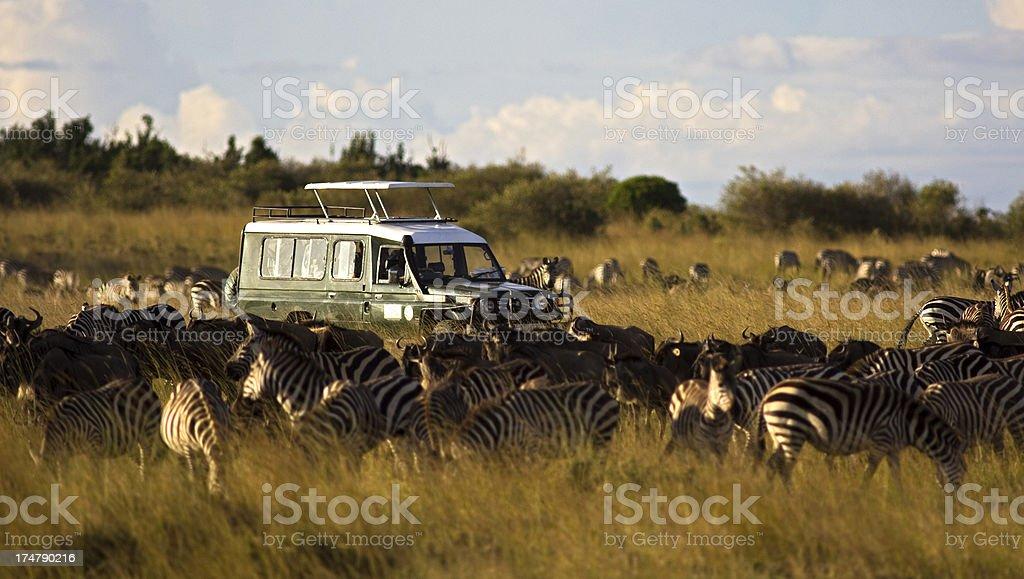 On safari stock photo