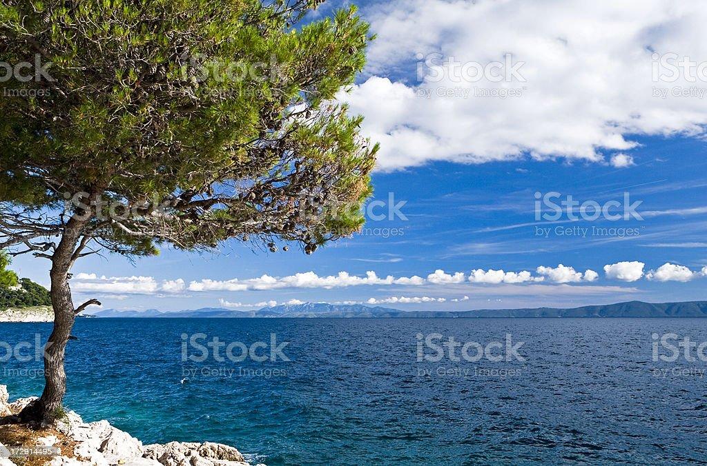 On seashore - lonely tree, sea and the blue sky royalty-free stock photo