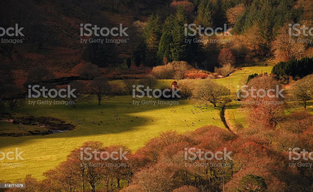 ...on spring meadows... stock photo