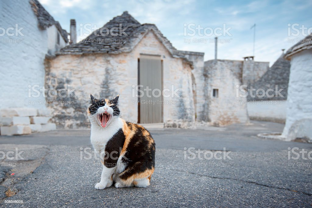 On street of an antique italian village, a cat lets stock photo