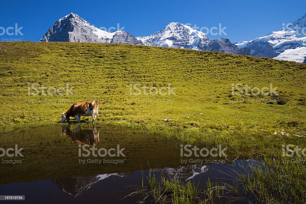 Auf der Alp royalty-free stock photo