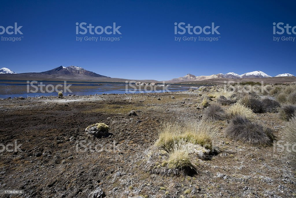 On the Altiplano in Chile stock photo