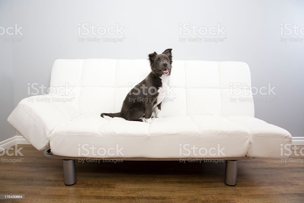 On The Couch royalty-free stock photo