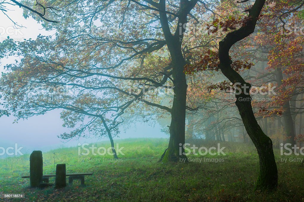 On the edge of a beech tree forest stock photo