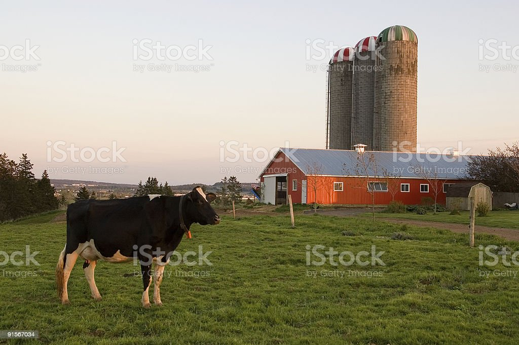 On the Farm stock photo