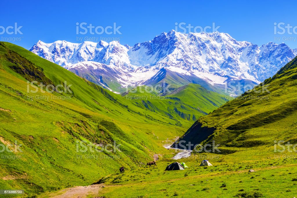 On the green lawn, among meadows and rocky mountains covered with snow, stand three tents near which are grazing cows.Upper Svaneti, Georgia, Europe. stock photo