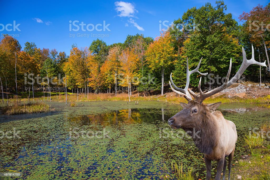 On the hill near the lake is deer antlered stock photo