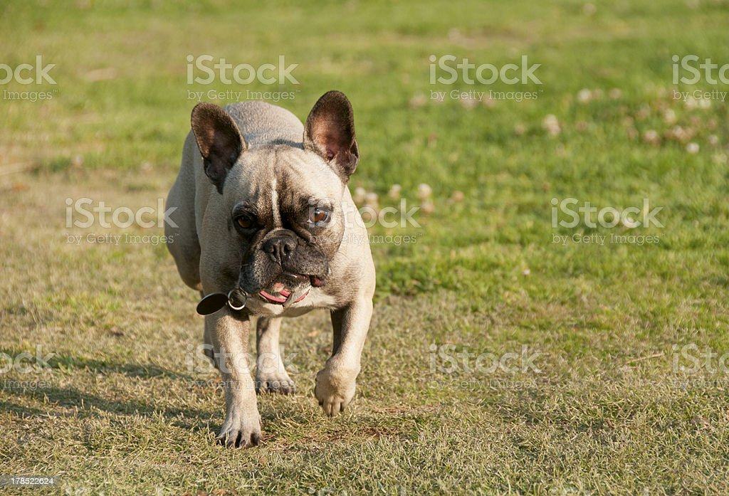 On the home straight royalty-free stock photo