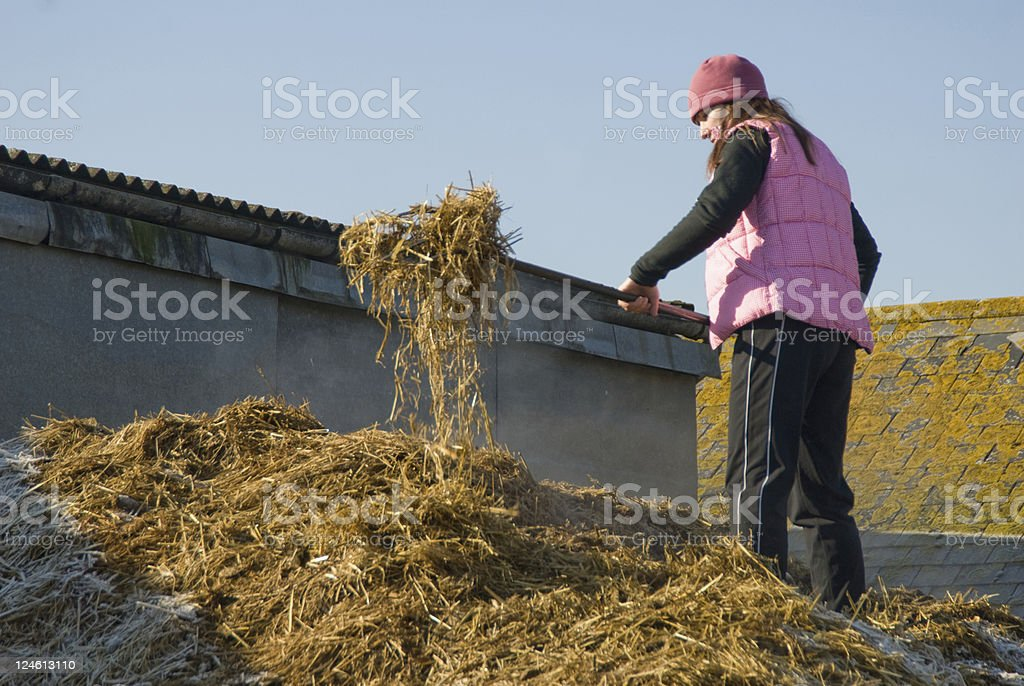 On the Horse muck heap stock photo