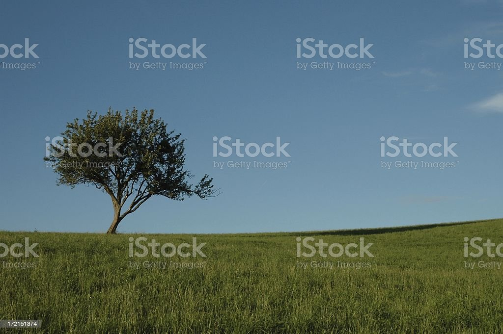 on the left royalty-free stock photo