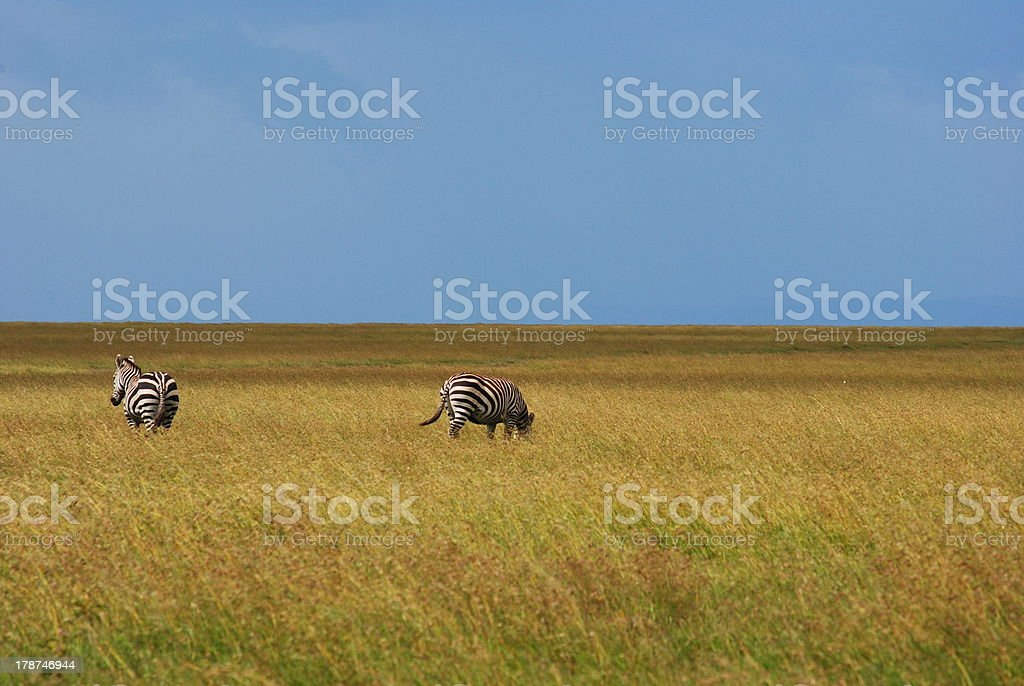 On the Plains stock photo