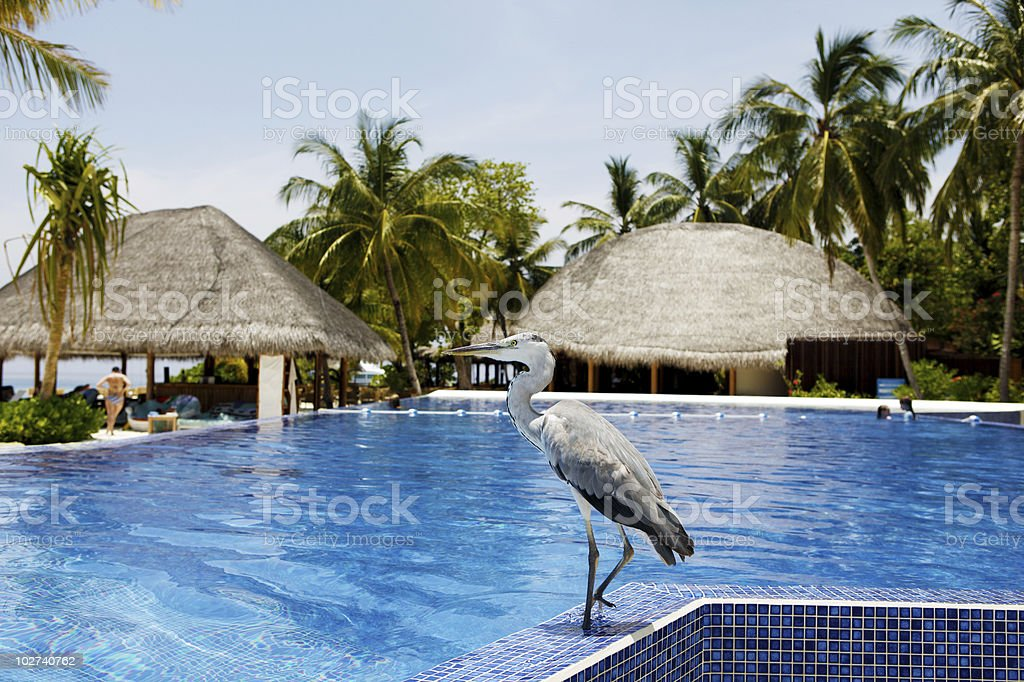 On the Pool royalty-free stock photo