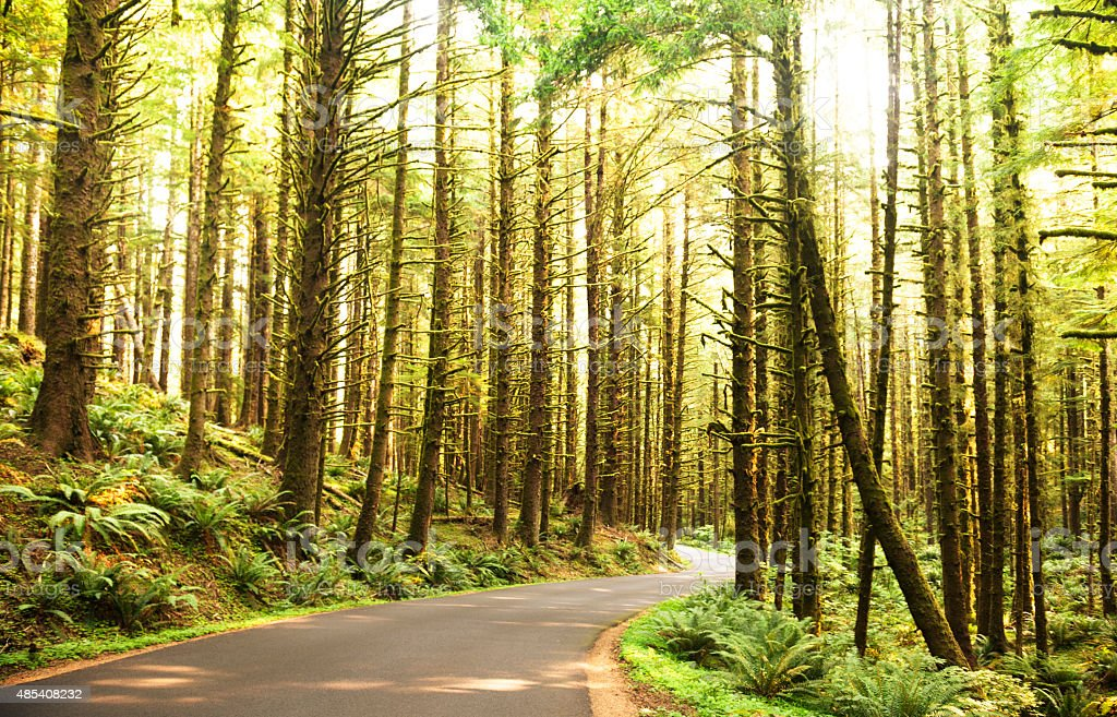 on the road on the ecola state park oregon stock photo