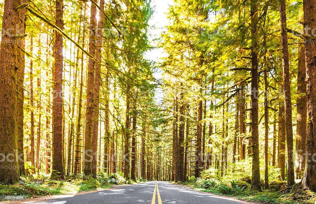 on the road on the sequoia woods stock photo