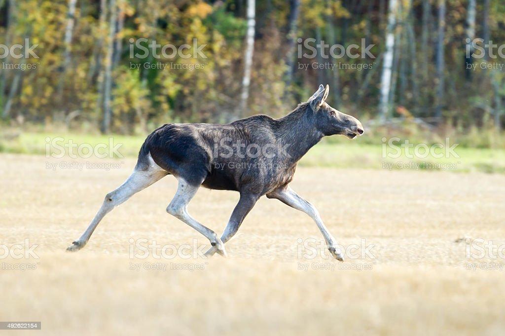 On The Run stock photo