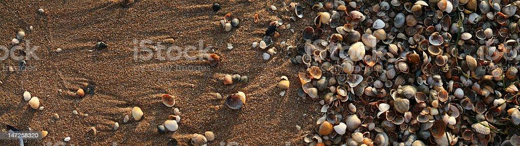 On the seashore. royalty-free stock photo