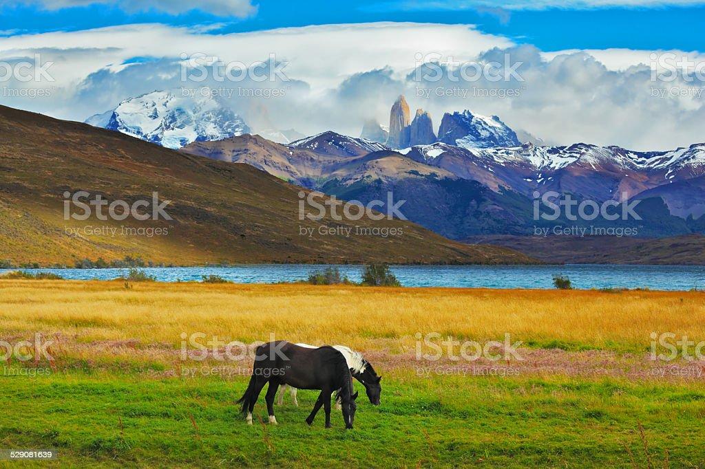On the shore of Lake grazing horses stock photo