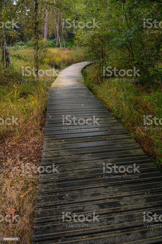 Auf dem Holzweg stock photo