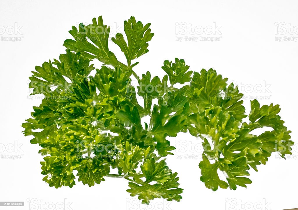 on white fresh curly parsley stock photo