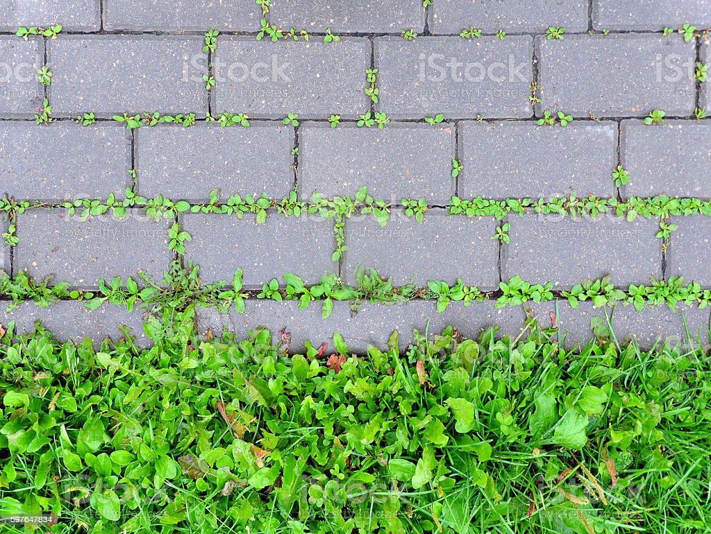 Сoncrete sidewalk coverage with sprouting green grass. stock photo