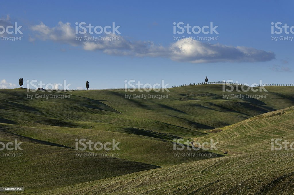 Ondulate green landscape with three cypresses and vineyard royalty-free stock photo