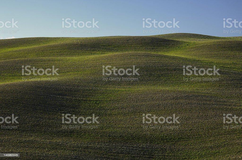 Ondulate green landscapein tuscany royalty-free stock photo