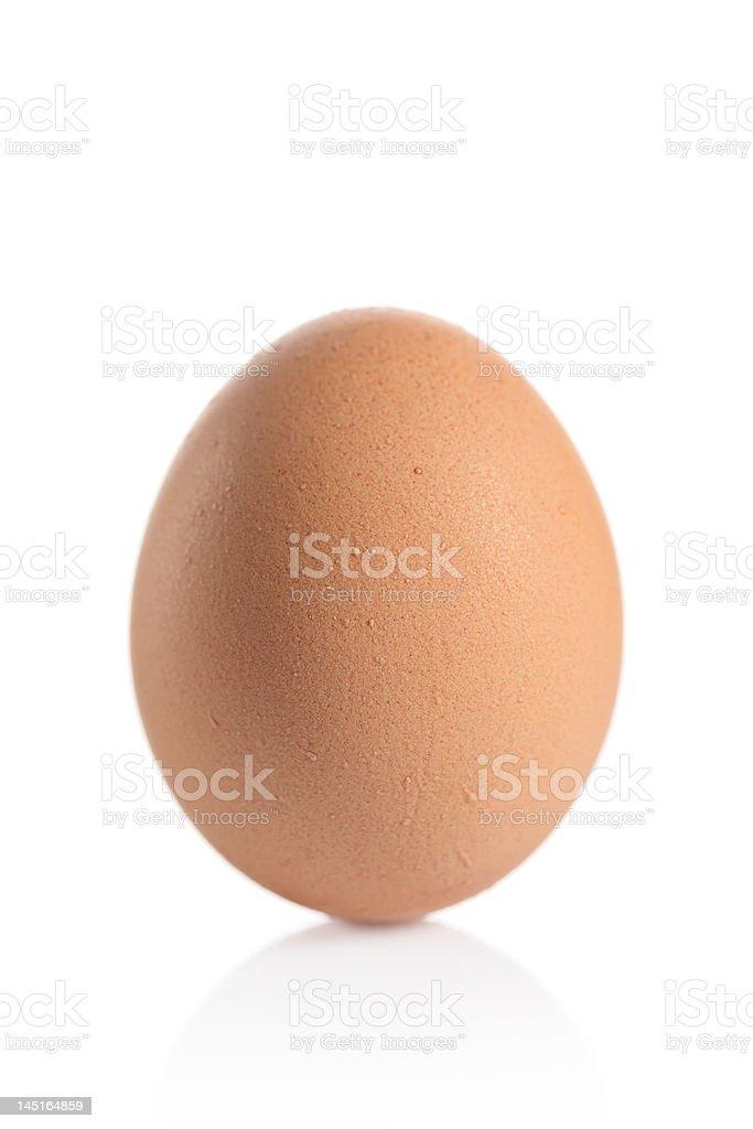 One animal egg royalty-free stock photo