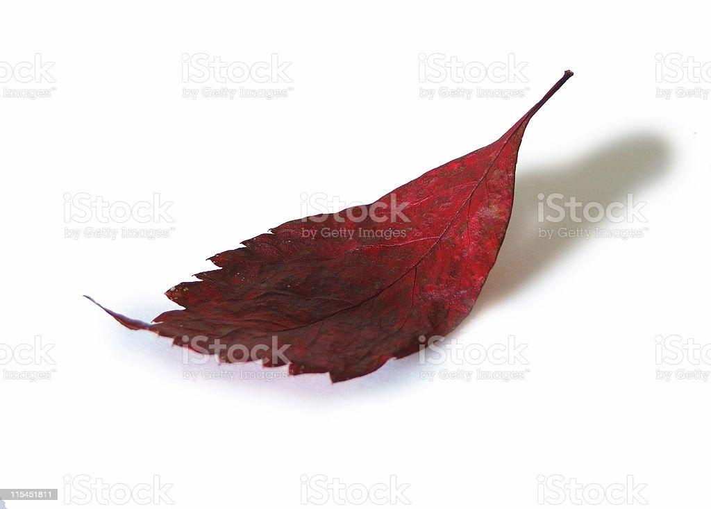 One autumn leaf royalty-free stock photo