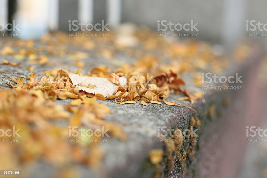 One big Leaf on small ones stock photo