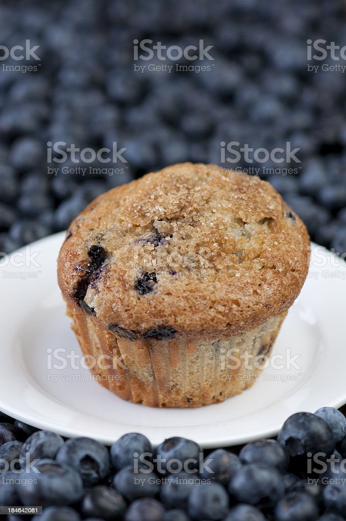 One blueberry muffin on plate surrounded by fresh berries royalty-free stock photo